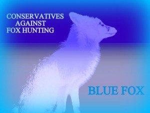 blue fox profile landscape